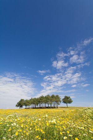 Spring landscape in Alentejo, Portugal.   photo