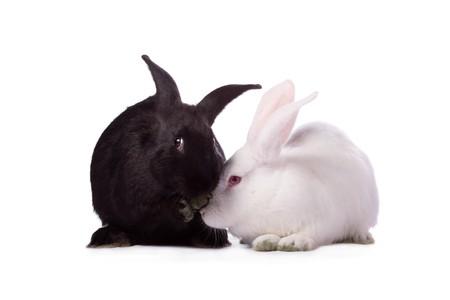 wit konijn: Konijnen zwarte en witte konijnen geïsoleerd op witte achtergrond