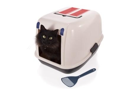 Gatto utilizzando una casella di lettiera chiuso isolata su sfondo bianco  Archivio Fotografico - 7019102