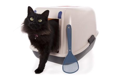 defecate: Gatto utilizzando una casella di lettiera chiuso isolata su sfondo bianco