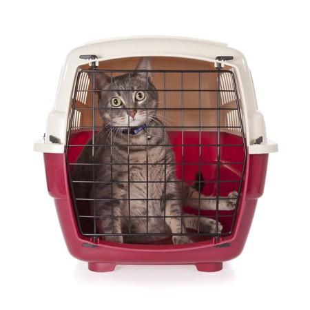 gato atigrado: gato cerrado dentro de mascota transportista aislado sobre fondo blanco