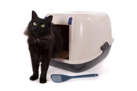 meados: Gato mediante un cuadro de basura cerrado aislado sobre fondo blanco