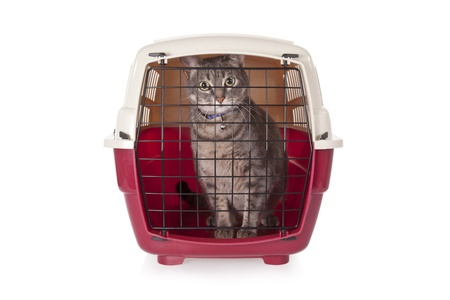 cat carrier: cat closed inside pet carrier isolated on white background