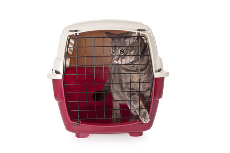 red door: cat closed inside pet carrier isolated on white  Stock Photo