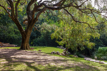 contorted: Lisbon, Portugal - October 19, 2016: Gardens of the Calouste Gulbenkian foundation. An urban park open to the public, and very popular especially among College students. Editorial