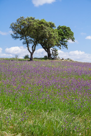 covered fields: Alentejo landscape during spring with the fields covered with flowers. Alto Alentejo, Portugal. Stock Photo