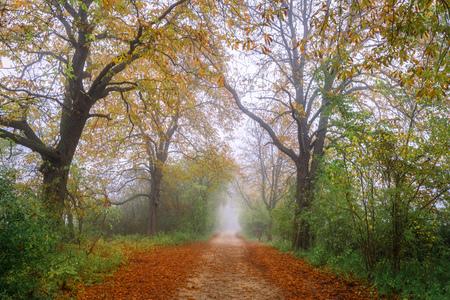 Autumn scenery Banco de Imagens