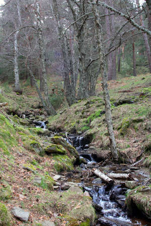 Stream surrounded by trees and green meadows