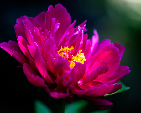 Beautiful pink flower with natures beauty which gives it a perfect look