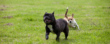 Two dogs playing with each other in a garden Stock Photo