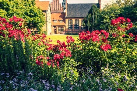 Roses in the garden of a historical building Banco de Imagens