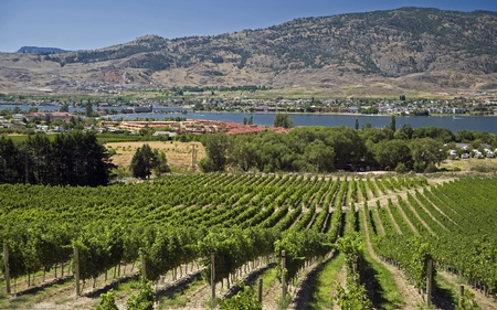 Orchards and vineyards in Osoyoos