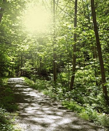 Sunlight in the forest Banco de Imagens