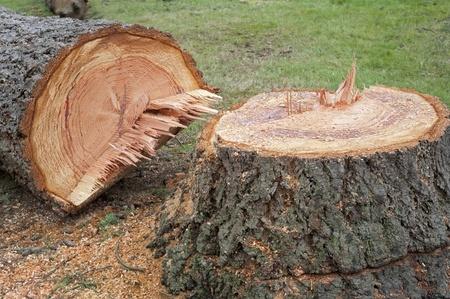 세 나무의 그루터기 스톡 콘텐츠