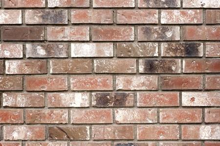 Brick wall as texture Stock Photo - 10849159