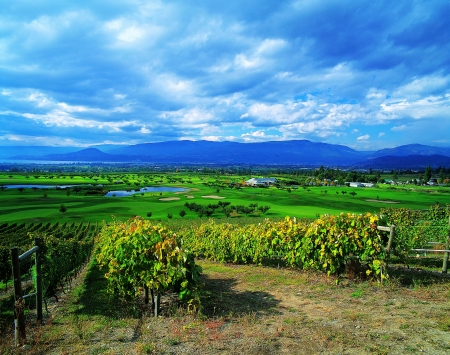 Vineyards and Golf courses by Kelowna Stock Photo