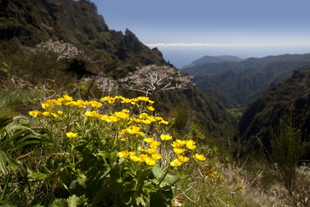 Madeira mountain scenery with a flower