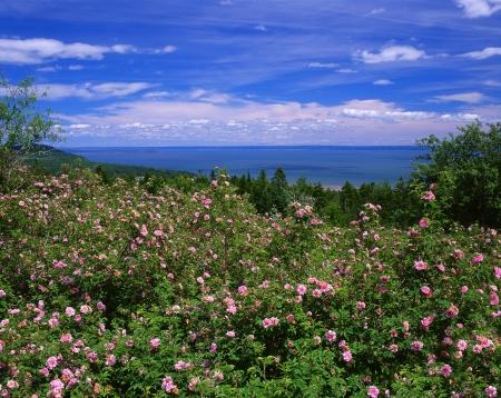 Baie de Fundy, au Nouveau-Brunswick, Canada Banque d'images - 12603118