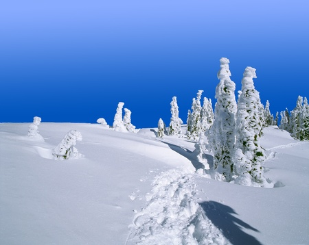 Winter forest scenery with trees covered by snow photo
