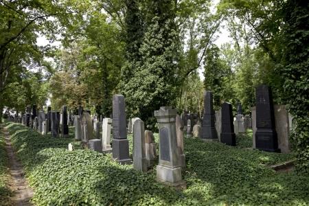 Prague - New Jewish Cemetery in Vinohrady Quarter photo