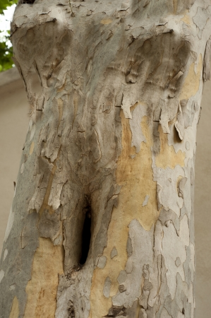 Woman torso in the tree - abstract Standard-Bild