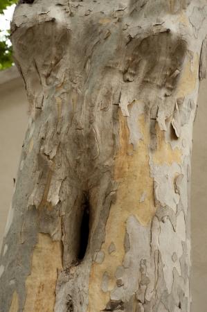 Mujer torso en el árbol - resumen Foto de archivo - 15828805