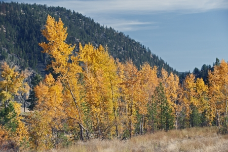 envoronment: Yellow trees by mountain in the fall