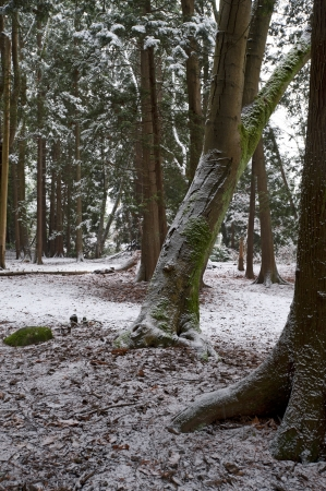 Forest in winter covered by the snow Stock Photo - 17548388