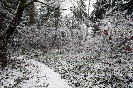 Forest in winter covered by the snow Stock Photo - 17530267