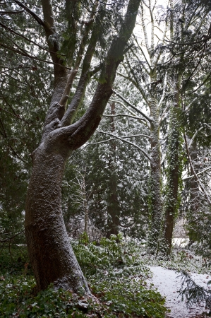Forest in winter covered by the snow Stock Photo - 17530284