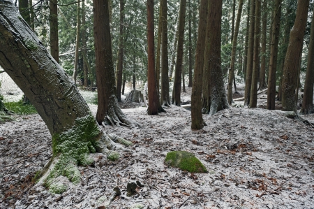 Forest in winter covered by the snow Stock Photo - 17530287