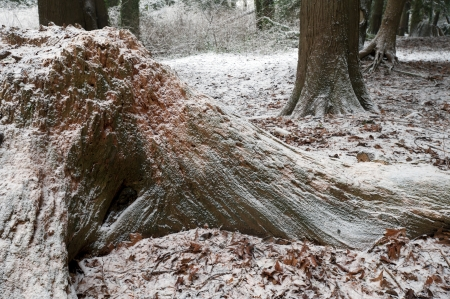 Forest in winter covered by the snow Stock Photo - 17548387