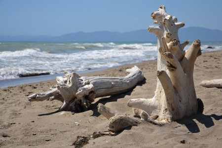 Washed up wood on the beach in Tuscany, Italy. Stock Photo