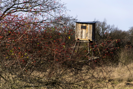 hunter: Wooden hunters high seat hide in forest with blue sky background