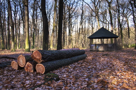 bower: Wooden bower stands in autumn forest