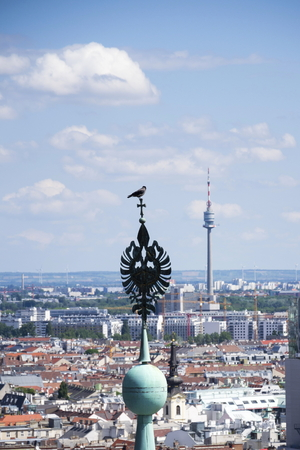 saint stephen cathedral: Aerial view of Vienna with bird on tower of Stephansdom
