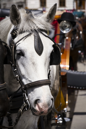 Horse carriage in Vienna, Austria with bowler on the light