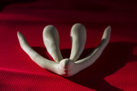 3d Printed Female Sex Organ Clitoris For Human Anatomy Lessons Stock