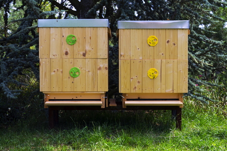 Bees flying into wooden hive on a sunny day Stock Photo