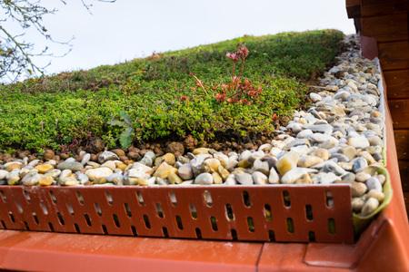 Detail of stones on extensive green living roof vegetation covered  Stock Photo