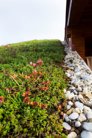 Detail of stones on extensive green living roof vegetation covered  Stock Photo