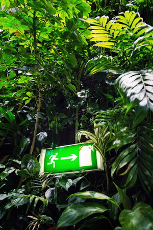 Green shining exit sign on living green wall, vertical garden Stock Photo