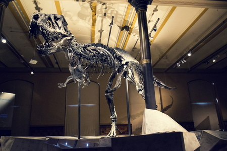BERLIN, GERMANY - MAY 16 2018: Tristan Otto Tyrannosaurus rex skeleton at the Natural History Museum - Museum fur Naturkunde on May 16, 2018 in Berlin, Germany. Редакционное