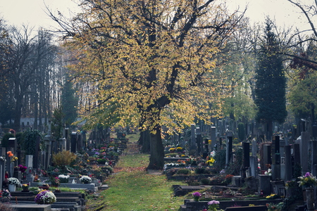Beautiful tree among graves, autumn on cemetery, Prague, Czech Republic, sunny day, All souls day concept