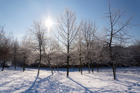 Sunbeams passing through branches in beautiful romantic snowy landscape, trees shadows on ground, sunny winter day, weather forecast, snowy christmas concept Stock Photo