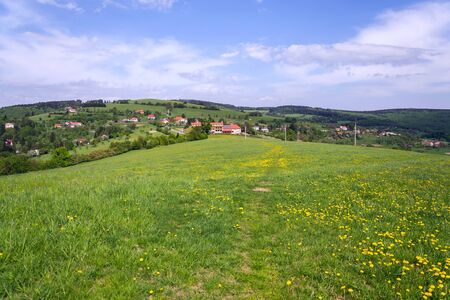 Beautiful summer landscape with blooming yellow dandelions around Zitkova village, White Carpathians in background, Czech and Slovak republics, sunny day, clear blue sky