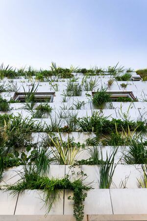 Window surrounded with root zone waste water treatment plant for greene vertical living wall, exterior facade Imagens