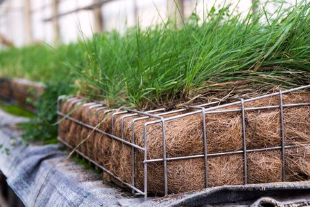 Green plants and grass growing through mesh of galvanized iron wire gabion box filled with soil, used for green living wall, vertical garden exterior facade