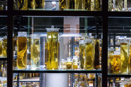 Shelves with various animals preserved in formaldehyde solution Editorial
