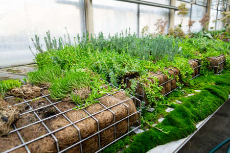 Green plants and grass growing through mesh of galvanized iron wire gabion boxes filled with soil, green living wall, vertical garden exterior facade
